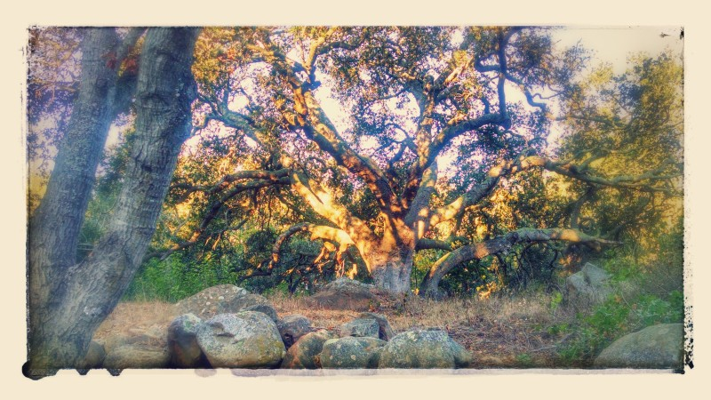 IMG_20150829_071745749_HDR-EFFECTS